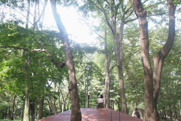 鈴木康広×中村製作所「屋根のベンチ」が井の頭公園へ