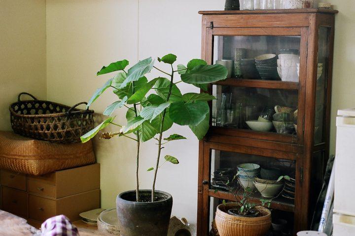 親子で営む花と器と猫の店、緑いっぱいの「野むら」を訪ねて。