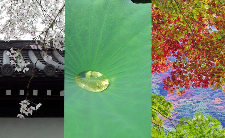 京都というフィルター 四季の色と陰影