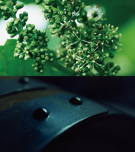 日本のワイン造りを知る企画展「甲州 三澤農場のワイン」 松屋銀座デザインギャラリー1953にて2018年7月18…