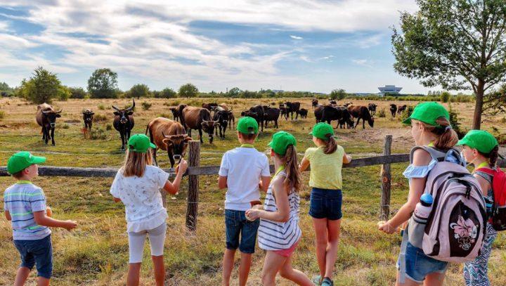 ポルシェが環境教育施設「ポルシェ・サファリ」をオープン 未来を見据えた新たな取り組み