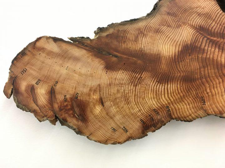森林火災が減ると木は乾燥に弱くなる!? アメリカの科学者が年輪分析から研究結果を発表