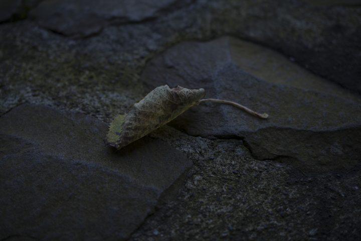 メディアアーティスト・落合陽一の世界 「質量への憧憬展」が品川・天王洲で開催