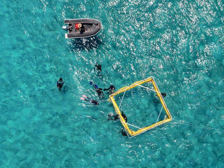 グレートバリアリーフのサンゴ修復に新たな方法 海中ロボットで幼生サンゴを直接散布