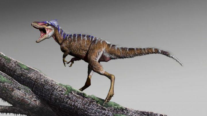 小型のティラノサウルス「Moros intrepidus」を新発見 約9,600万年前の白亜紀にアメリカに生存