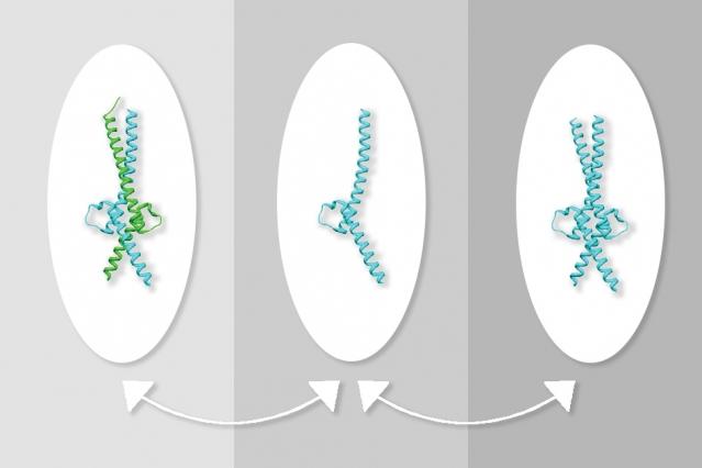 がん遺伝子「Myc」の活動を抑えられる!? MIT研究チームが効果的な化合物を発見