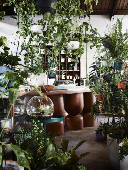 植物のある暮らしの素晴らしさを伝えたい。メルボルンのThe Plant Societyを訪ねて。