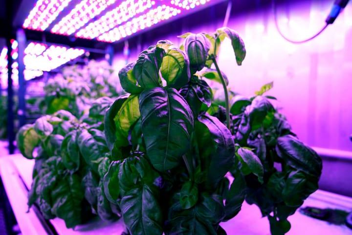 MIT Media Labによる「サイバー農業」 機械学習でバジルの風味を最大化
