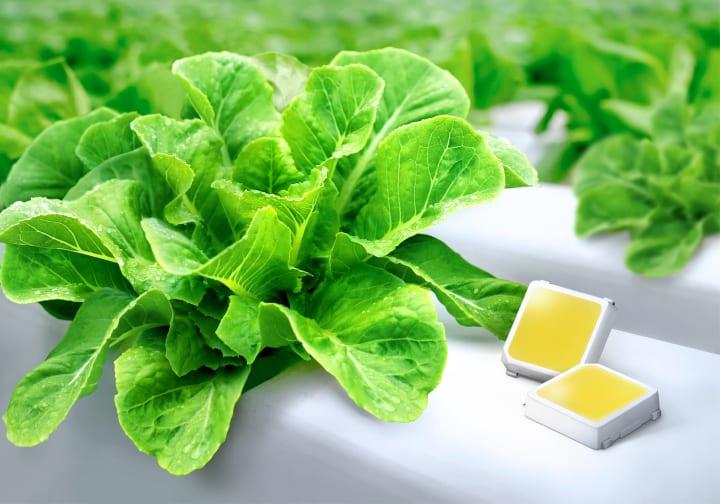 サムスンが中電力LEDパッケージ「LM301H」を改良 温室や垂直農法などにより多くの光を供給