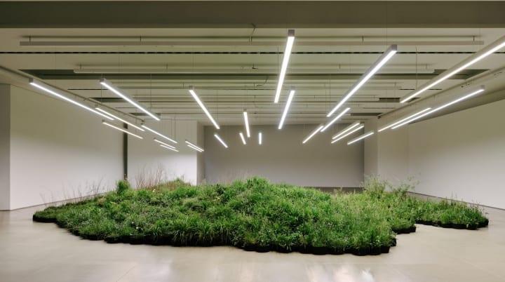 大型植物インスタレーション「Adjacent Field」 「ジル・サンダー」新シリーズのために構想