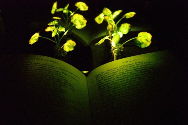 未来の建築の照明装置になりうる!? MITが研究中のナノ粒子を用いた「発光植物」