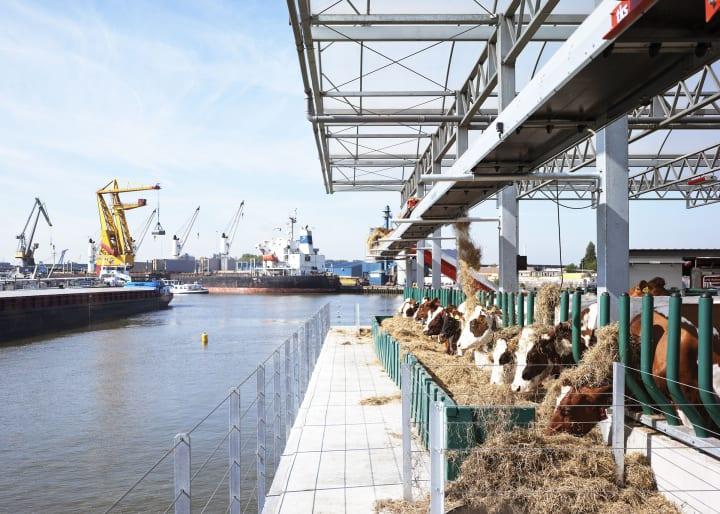 オランダ・ロッテルダムの港に浮かぶ「Floating Farm」 40頭の乳牛を収容できる三重構造の牛舎