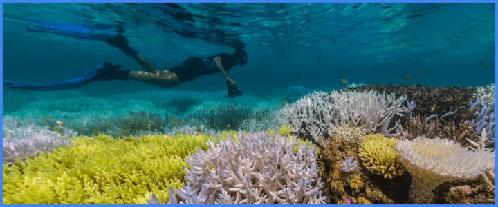 Google Earthが世界海洋デーに合わせて バヌアツ諸島などの新たな水中ストリートビューを公開