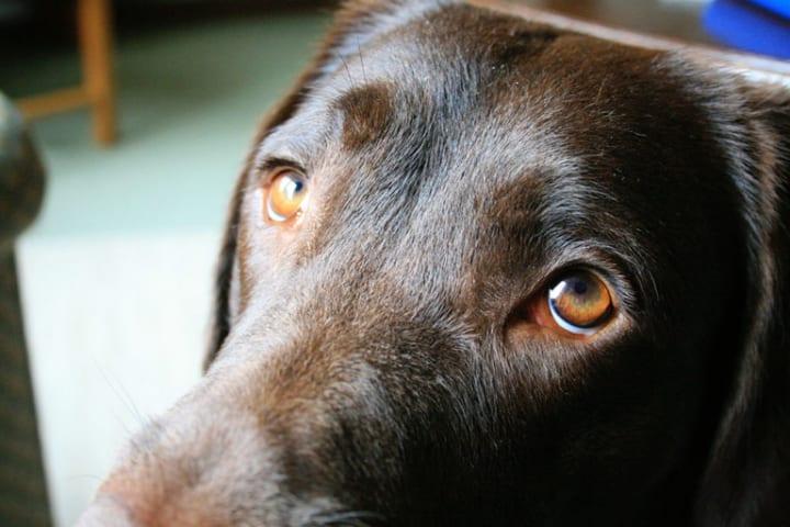 犬はどうして人間と良好な関係が結べるのか? イギリスのポーツマス大学がその研究結果を発表