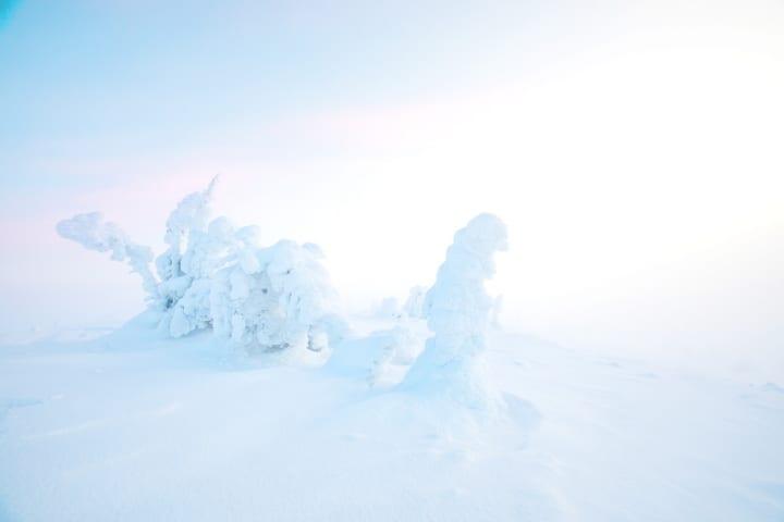 フィンランドのフードテック企業「Solar Foods」 空気・水・電気だけでタンパク質を作るプロセス「Solein…