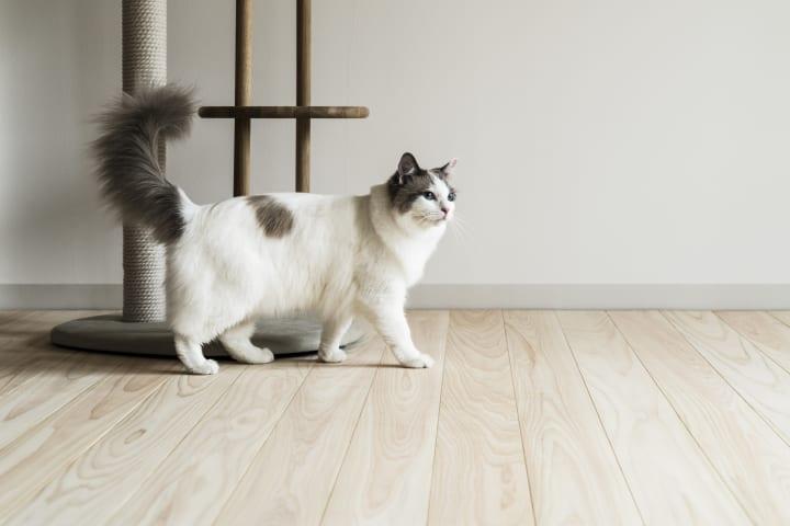サンワカンパニーとRINNがコラボレーション 猫共生住宅向けフローリング「NEKOFLOOR」を発売