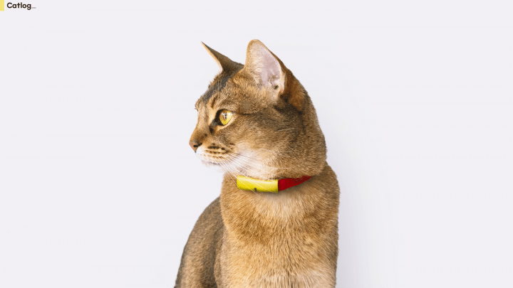 猫の生活をテクノロジーで見守る「Catlog」がローンチ クロネコヤマトとのコラボも登場