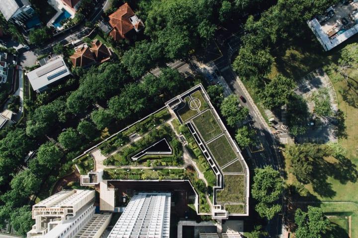 ソニーCSLが森ビル屋上庭園で協生農法の実証実験 プランターに100種と露地栽培で200種の植物を配置