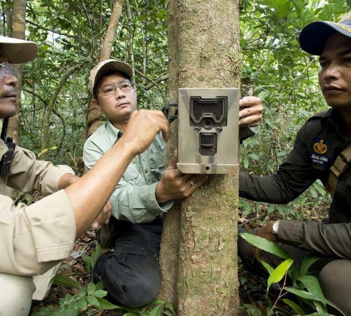 モーションセンサーで世界中の野生動物の生存状況を評価する 新しいツール「Wildlife Insights」が公開