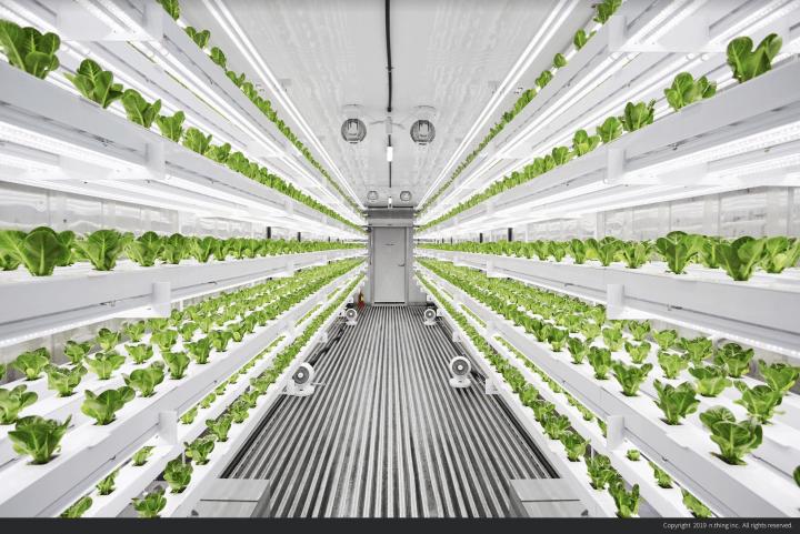 n.thingによるモジュール式の垂直農場「Planty Cube」 40フィートコンテナで高品質の野菜を栽培