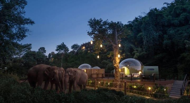 自然のなかでゾウを間近に見る宿泊施設 タイ北部のリゾートホテルにある「Jungle Bubble」