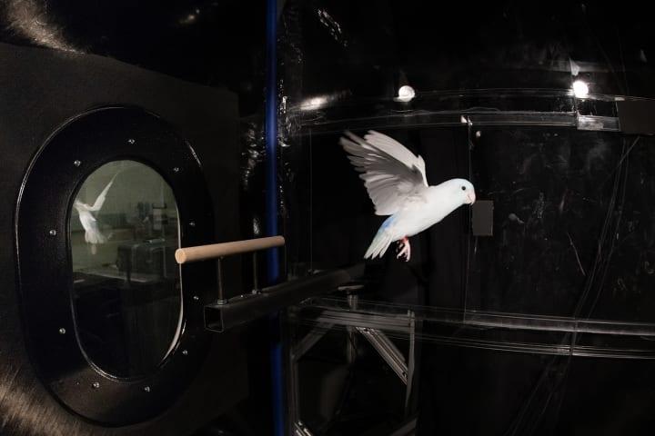 抗力は物体を減速させる力ではない!? 鳥が抗力を使って飛び立つことをスタンフォード大学が発見