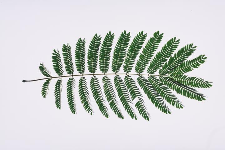 国立科学博物館が植物のおしば標本から 非破壊的にDNAを抽出する新手法を開発