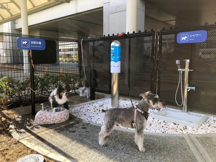 大阪国際空港内に「愛犬専用トイレ」が登場 国内空港初、搭乗前にストレス軽減