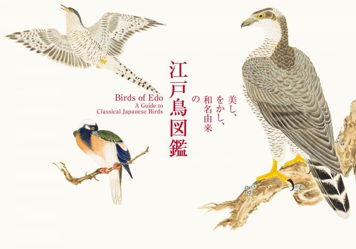 江戸の博物画から美麗な鳥たちの姿を追う 書籍「美し、をかし、和名由来の江戸鳥図鑑」刊行