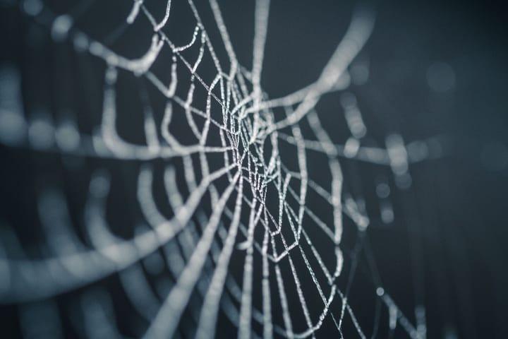 理研がクモ糸の構造を解明 強靭な人工クモ糸作製の設計指針に有用