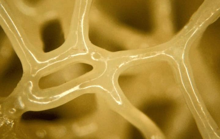 生物の組織を3Dプリンタで再現!? 柔らかく多機能な材料「液晶エラストマー」で格子構造を開発