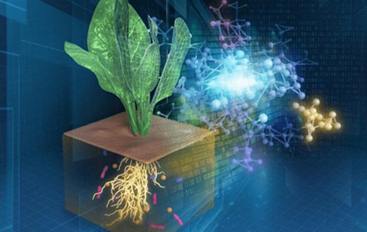 理化学研究所、農業生態系のデジタル化に成功 熟練農家の作物生産技術を科学的に可視化