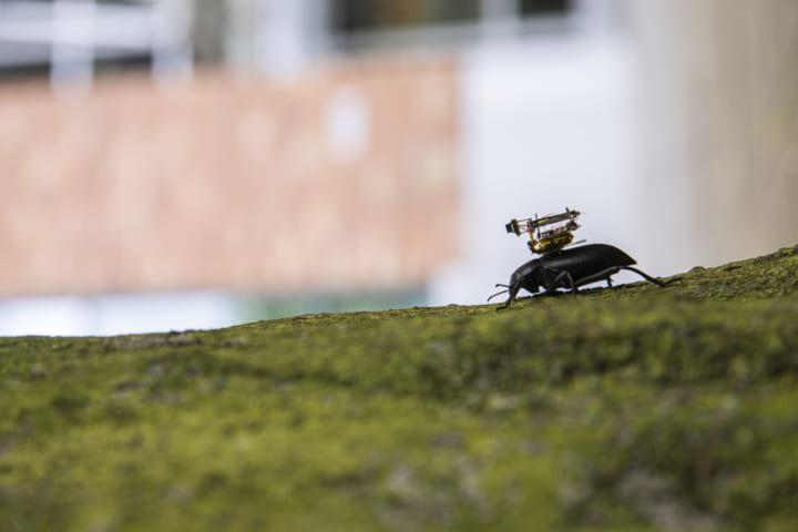 米ワシントン大学による 昆虫の視点を体感できる超小型カメラが開発