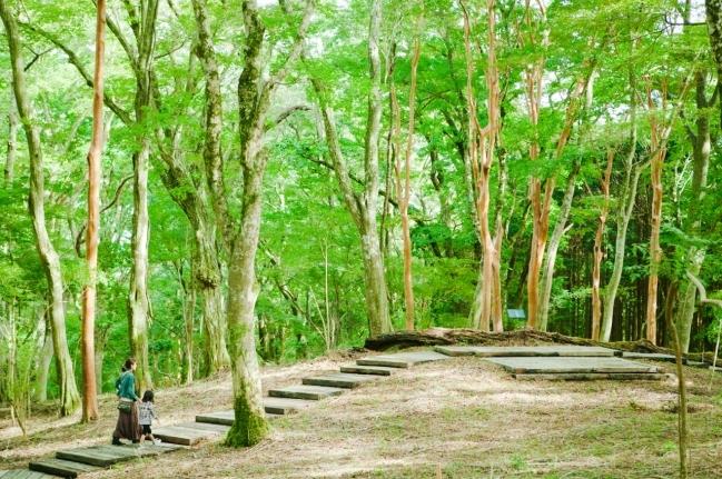 ポーラ美術館の屋外「森の遊歩道」の美しさを表現 Susan Philipszによるサウンド・インスタレーション「Wi…