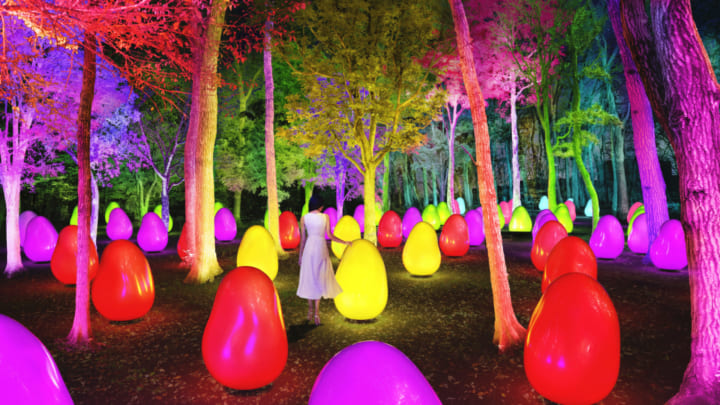 チームラボ、東所沢公園の武蔵野樹林パークに 自然を感じさせるアート空間「どんぐりの森の呼応する生命」…