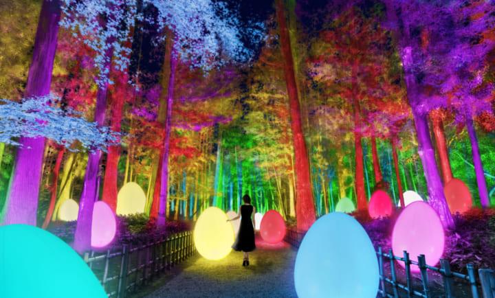 茨城・水戸の日本三名園・偕楽園が インタラクティブな光のアート空間「チームラボ 偕楽園 光の祭」に