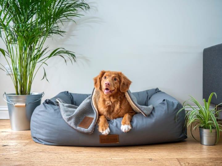 愛犬の心拍データを「イヌパシー」で取得・活用 ラングレスによるマーケティング支援サービス