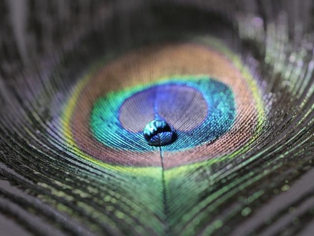 福岡工業大学大学院、力を検知して色変化を起こす 新素材「無機ナノシート構造色ゲル」を開発