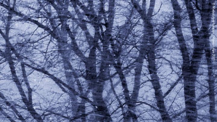 【阿部雅世さんの新連載 3】見えないものと生きてゆく時代に――嵐の中の静けさ