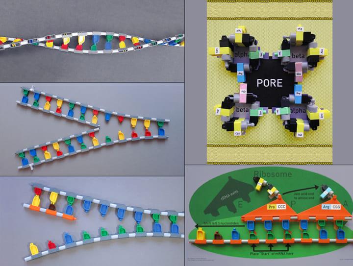 タンパク質の仕組みをよりよく学ぶには? MITの研究者がブロックを使った教育法を開発