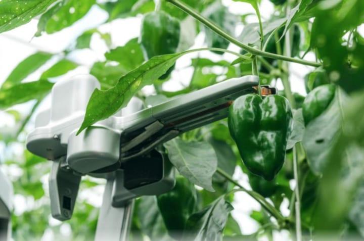 自動収穫ロボットを開発するAGRIST スマート農業を語るオンライン会議を開催